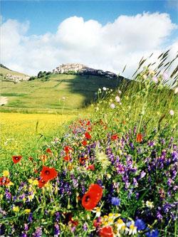 De hoogvlakte van Castelluccio