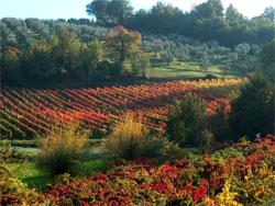 Montefalco, de wijnstad van Umbrie