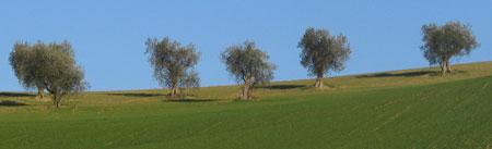 Mooie heuvels en opera: vele redenen om de Marken te bezoeken