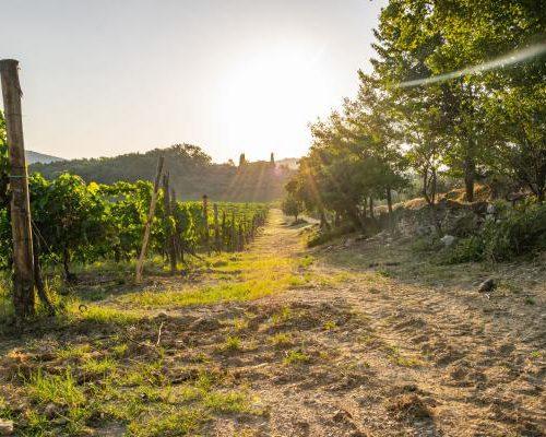 De beste Italiaanse wijnstreken