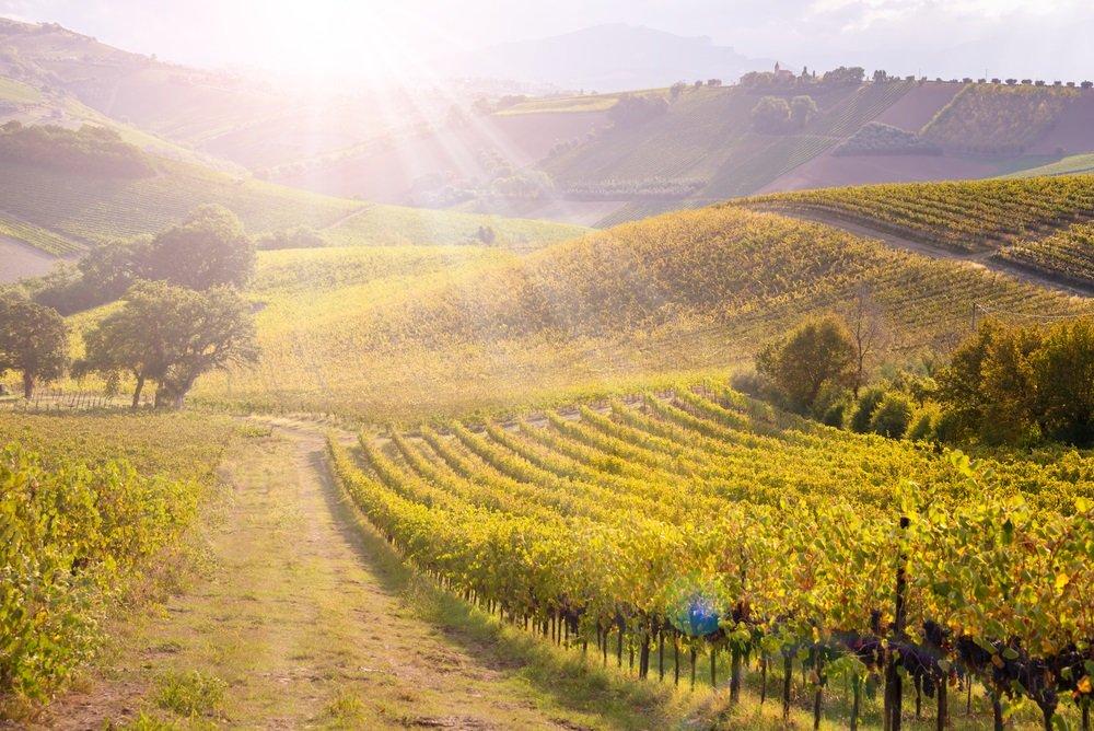 Wijnregio-Toscane